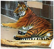 Stripes, whiskers and giant paws Poster