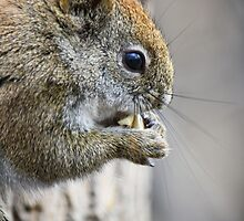 Seriously...do you have to watch me eat? by Heather King