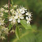 White Flower by Anita Schuler