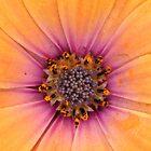 Little Orange Flower by CormacEby