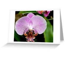 Orchid 45 Greeting Card