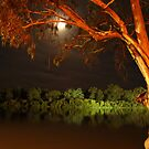 Tree by the Murray by Paul Campbell  Photography