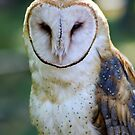 Barn Owl by Teresa Zieba