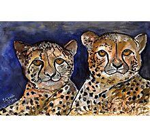 Cheetahs Photographic Print