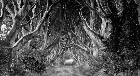 The Dark Hedges by Jon Fassett