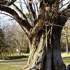 Champion Osage Orange Tree by WildestArt