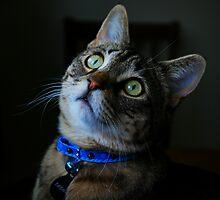 Blue Collar Kitty by jodi payne