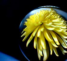 Through the crystal ball - Yellow Chrysanthemum by Vicki Field