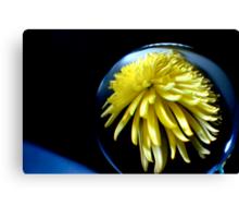Through the crystal ball - Yellow Chrysanthemum Canvas Print