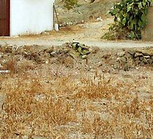 <º))))>< LETS SEE WHO HAS A KEEN EYE CAN U FIND THE CAT IN THIS PICTURE ?<º))))><  by ╰⊰✿ℒᵒᶹᵉ Bonita✿⊱╮ Lalonde✿⊱╮
