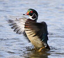 The little wood duck that could by Heather King