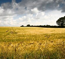 The wheatfield by AlanPee