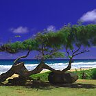 Beautiful Kauai by Brian Harig