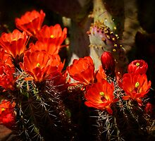 Hedgehog Bouquet  by Saija  Lehtonen