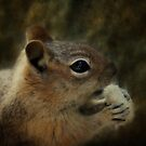 Chipmunk by Yool