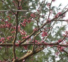 RedBud Tree by ack1128