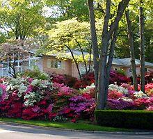 Azalea House, Alps Road, Wayne NJ by Jane Neill-Hancock
