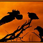 Vultures Roosting @ Sundown by JimWork