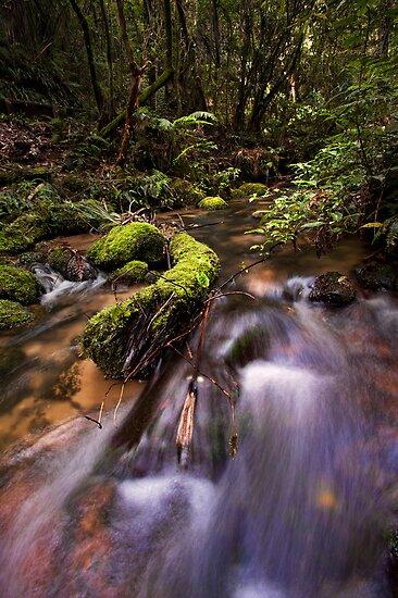 Mclarens Moss by Ken Wright