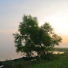 Fogy Spencer lake morning by iamwiley