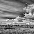 Catching Clouds (black and white) by Vicki Field