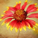 Spring Time Flower Print. by mikepemberton