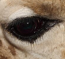 Ungulate Eye: the Eye of a Rothschild's Giraffe  by Carole-Anne
