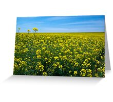 Springtime Oklahoma ! Greeting Card