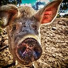 I oink, therefore I am by Maree Cardinale