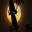 Moon Flower. by mikepemberton
