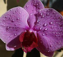 Orchids II - Orquídeas by Bernhard Matejka