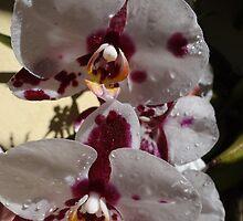 Orchids III - Orquídeas by Bernhard Matejka