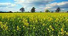 Rural scene, Bristol, UK by buttonpresser