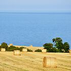 Hay Bales by curiouscat