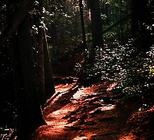Panther Creek Trail, GA by GodsEarth