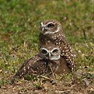 Burrowing Owl Pair by Gail Falcon