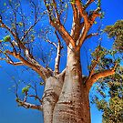 The Boab Tree by Eve Parry