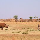 Gemsbok and White Rhino Negotiating Terms by Darren Stein