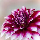 Flower - Dahlia by Anthony Radogna