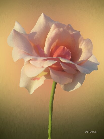 Rose Ethereal by RC deWinter