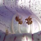 Say Ahhhh! - Wild Foxglove - Texas, USA by aprilann