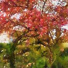 My Appletree - Edegem - Belgium by Gilberte