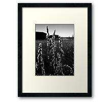 Leaves of Grass Framed Print