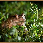 Texas Toad exploring at night by JimWork
