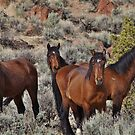 Wild horses of Palomino Valley  #6 by SB  Sullivan
