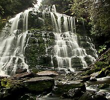 Nelson Falls, Tasmania by Julia Harwood