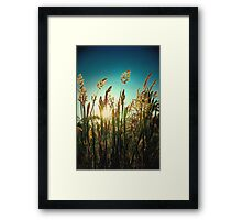 Golden moment.. Framed Print
