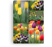 beautiful colorful flowers  Canvas Print