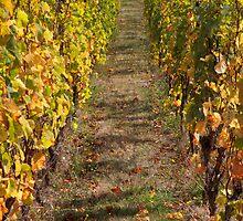 It's a Vine Line - Coal River Valley, Tasmania by clickedbynic