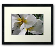 Springtime White Framed Print